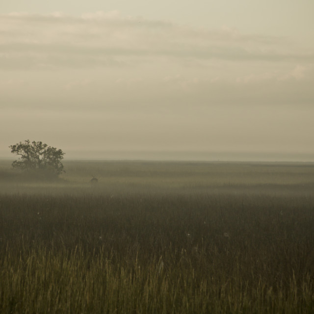 """Marshland"" stock image"