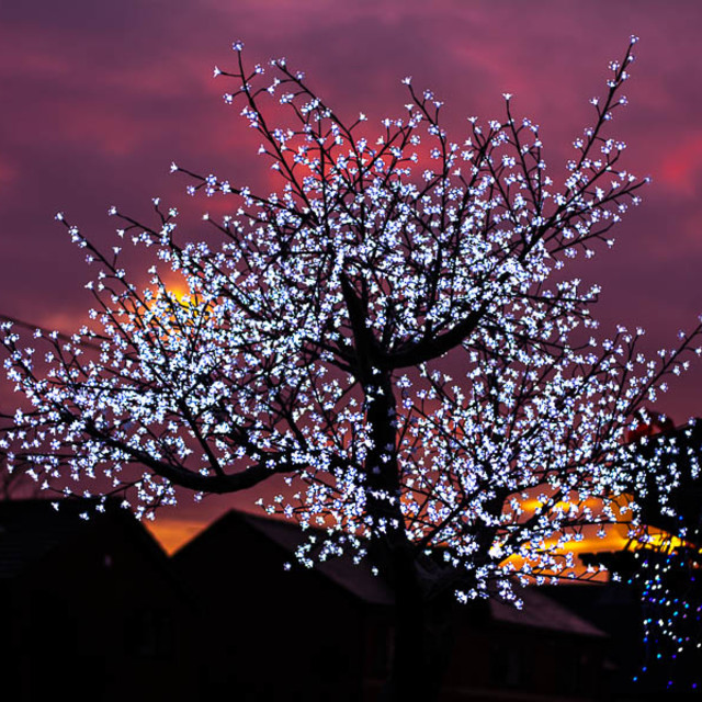 """Fairy Lights Sunset"" stock image"