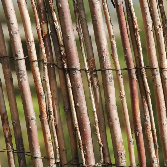 """willow fencing"" stock image"