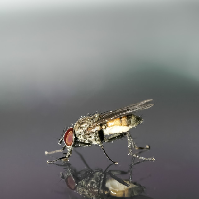 """fly macro"" stock image"