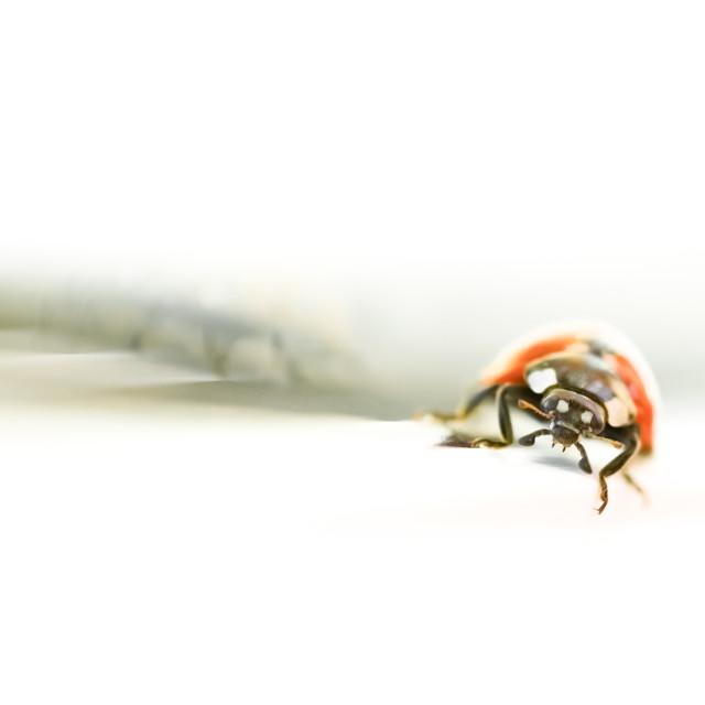 """""""ladybug abstract"""" stock image"""