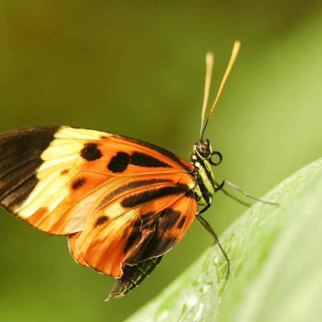"""butterfly macro"" stock image"