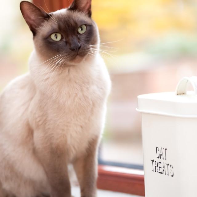 """""""cat treats"""" stock image"""