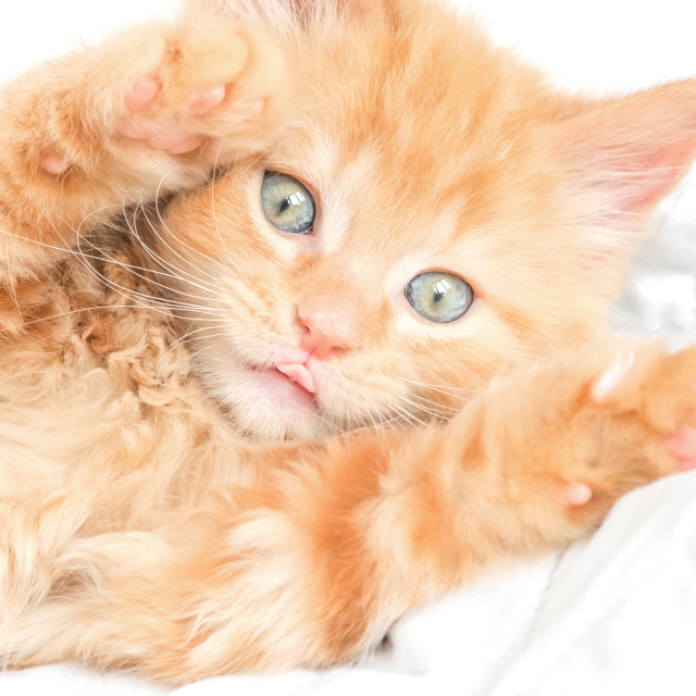 """playful kitten"" stock image"