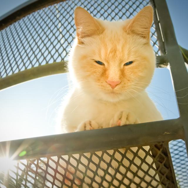 """""""outdoor cat"""" stock image"""
