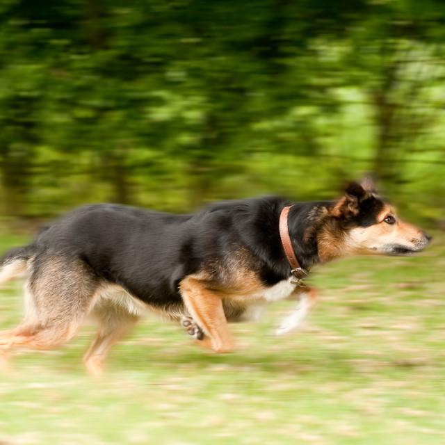 """dog motion blur"" stock image"
