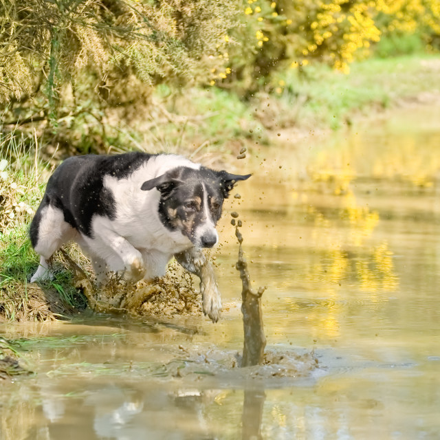 """""""chasing a ball"""" stock image"""