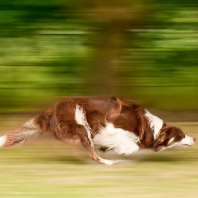 """dog running motion blur"" stock image"