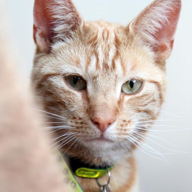 """Peeping Cat"" stock image"