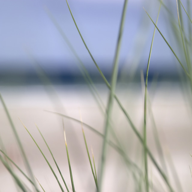 """abstract beach grass sky 02"" stock image"