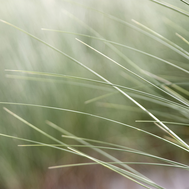 """abstract beach grass"" stock image"