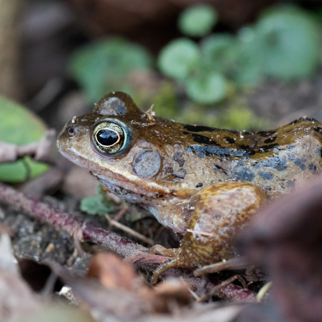 """""""First frog of spring"""" stock image"""