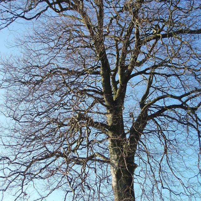 """""""leafless tree"""" stock image"""