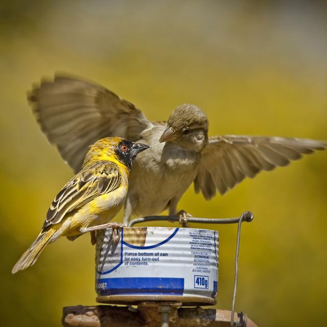 """DSC_5135- Garden Birds"" stock image"