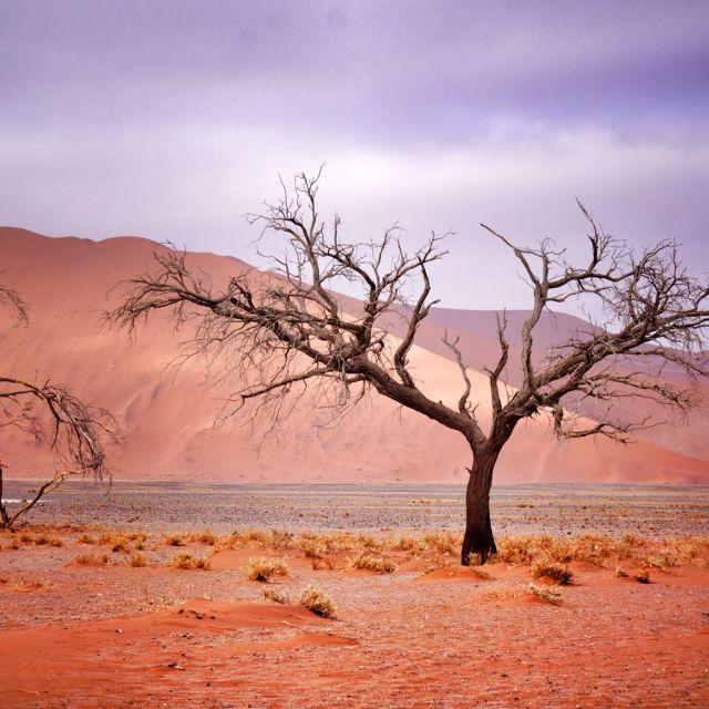 """""""sossusvlei desert"""" stock image"""