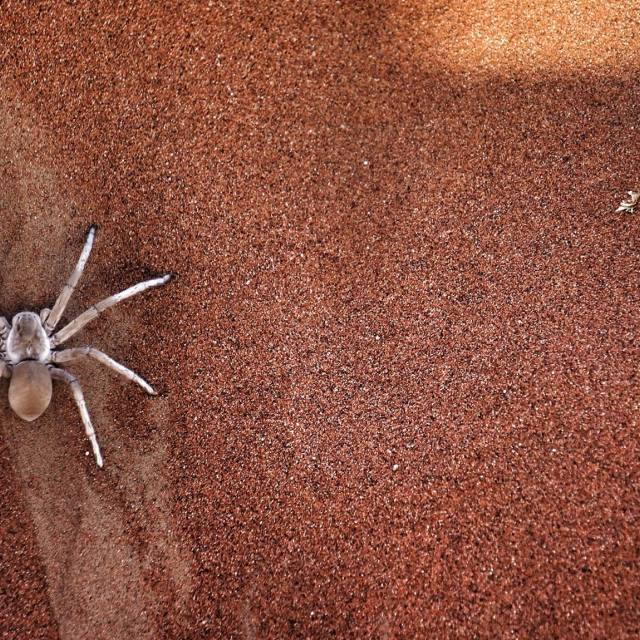 """poisonous spider in namibia"" stock image"