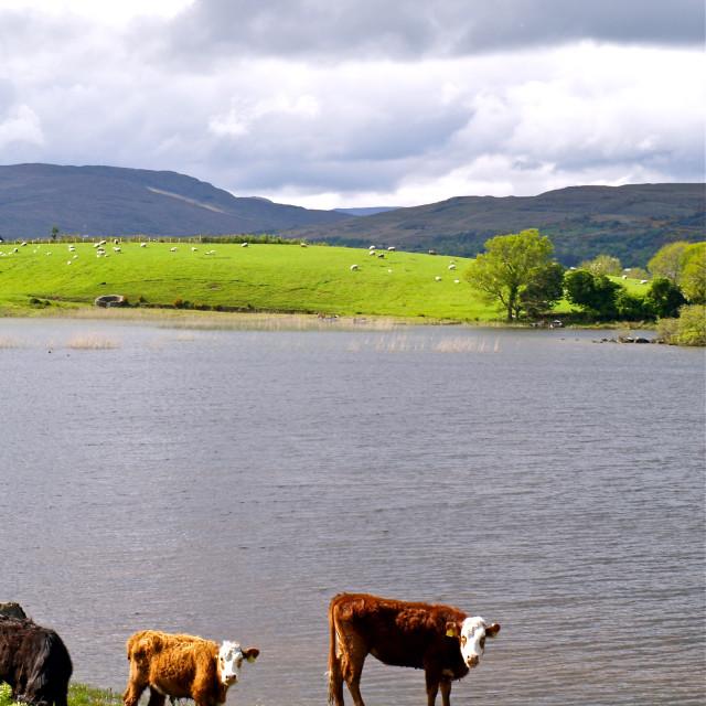 """Lough Corrib"" stock image"