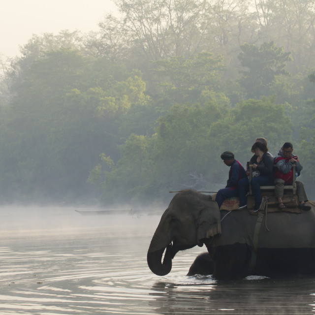 """Elephant safari at Bardia, Nepal"" stock image"