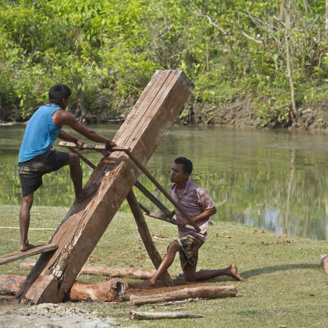 """Tharu men sawing wood in Bardia, Nepal"" stock image"