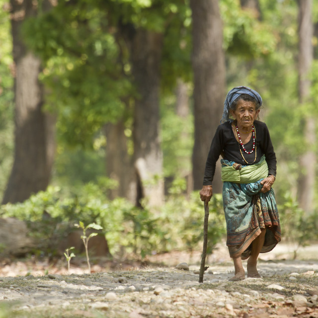 """Very old tharu woman walking in jungle in Bardia, Nepal"" stock image"