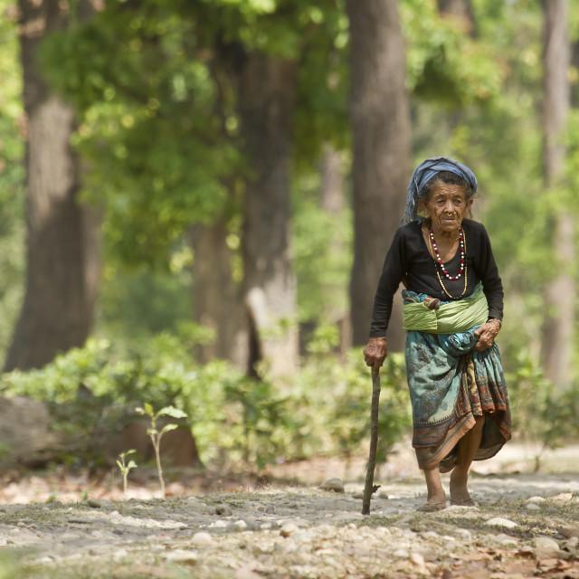 """Very old tharu woman walking in jungle in Bardia, Nepal"" stock image"