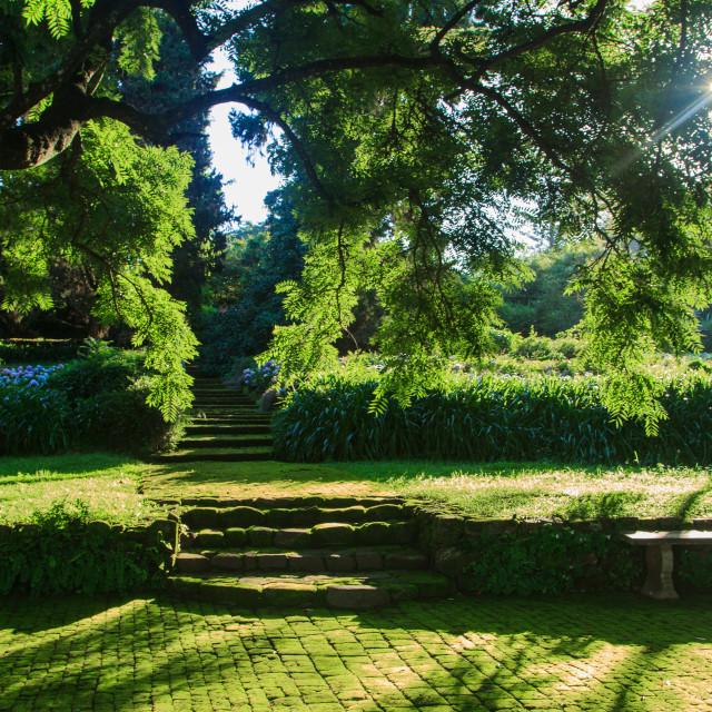 """Secret Tea Garden"" stock image"