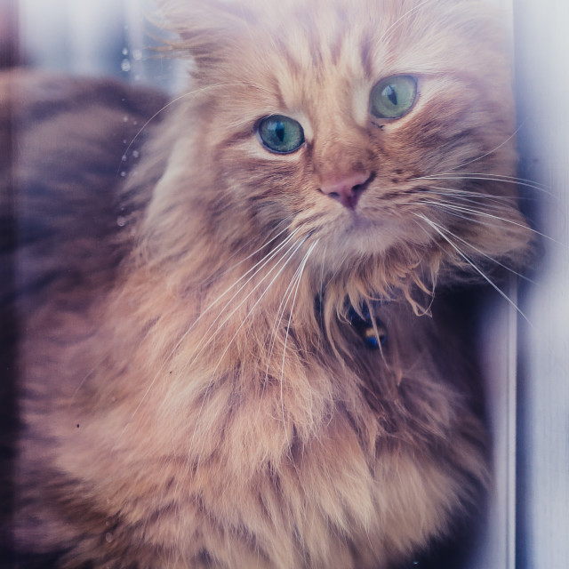 """Cat in Window"" stock image"