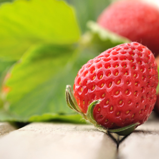 """close on strawberry"" stock image"