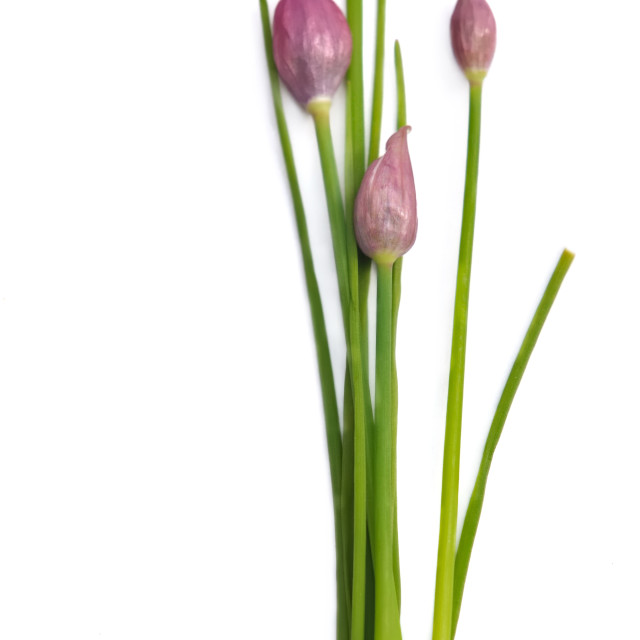 """""""chives"""" stock image"""