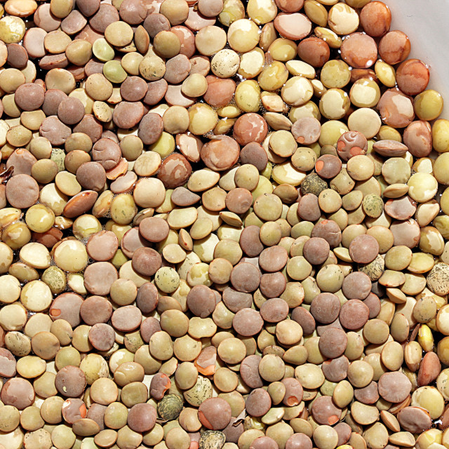 """""""Lentils on a white ceramic plate"""" stock image"""