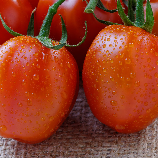 """Cherry Tomatoes - Close up"" stock image"