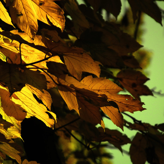 """Swaying Leaves"" stock image"
