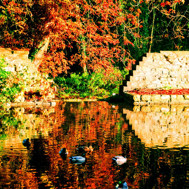 """Autumn scene reflections on a village pond, with mallards swimmi"" stock image"