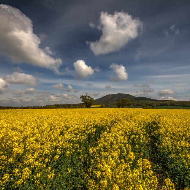 """Shropshire Spring"" stock image"