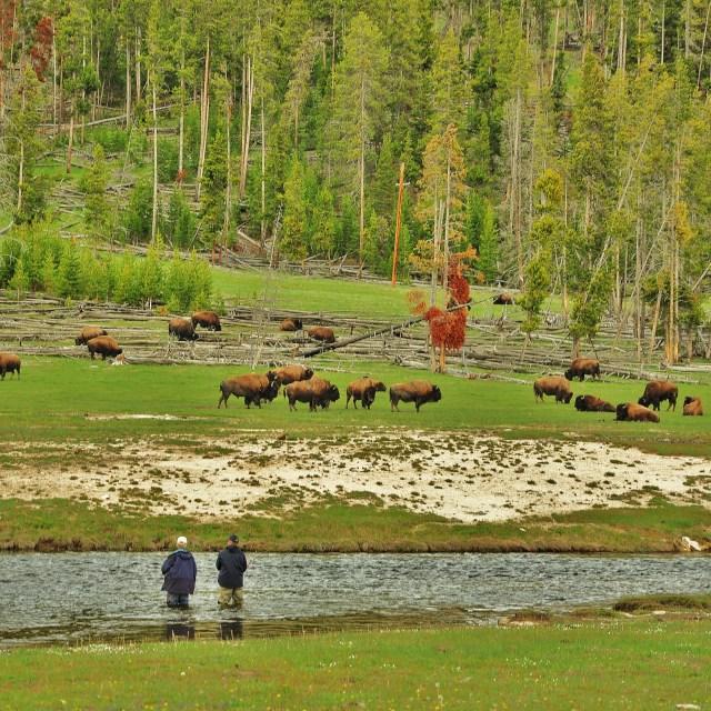 """Fishing with Buffalo"" stock image"