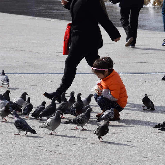 """feeding the pigeons"" stock image"