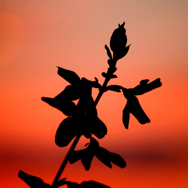 """Silhouette Sunset"" stock image"