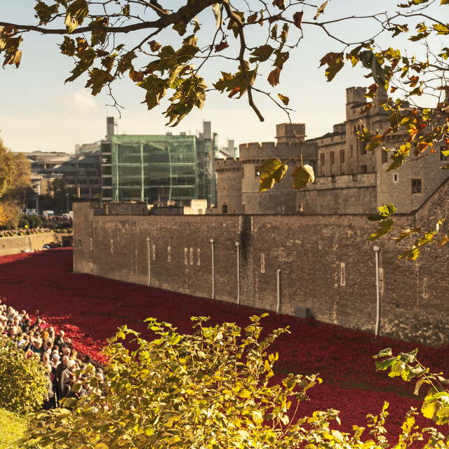 """London - Poppies at the Tower of London"" stock image"
