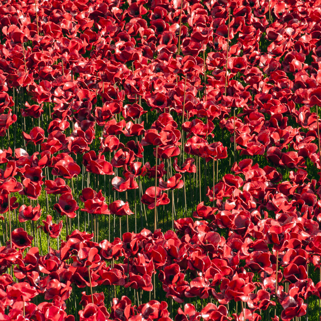 """Ceramic Poppies in London Remembrance"" stock image"