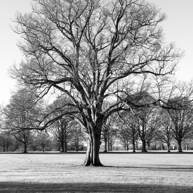 """A Bare Tree in Winter"" stock image"