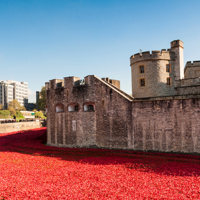 """""""London - Poppies at the Tower of London"""" stock image"""