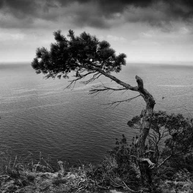 """Lone tree on the sea in black and white"" stock image"