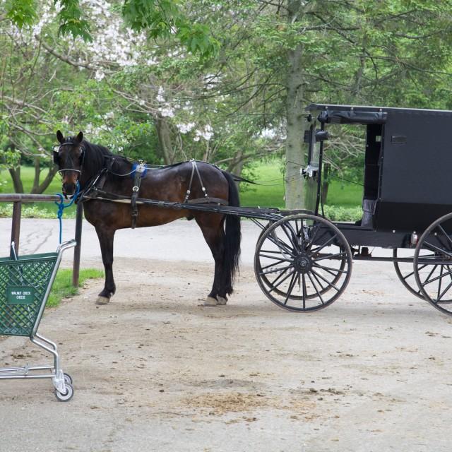 """Horse Drawn Buggy"" stock image"
