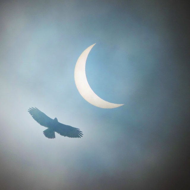 """Buzzard Eclipse"" stock image"