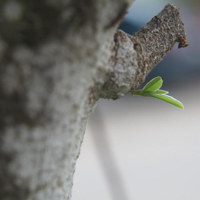 """Newborn leaf shoots"" stock image"