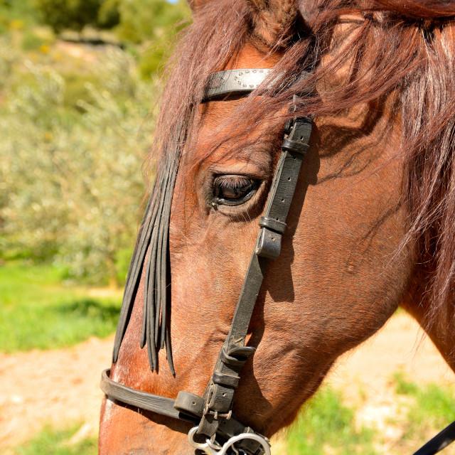 """head horse"" stock image"