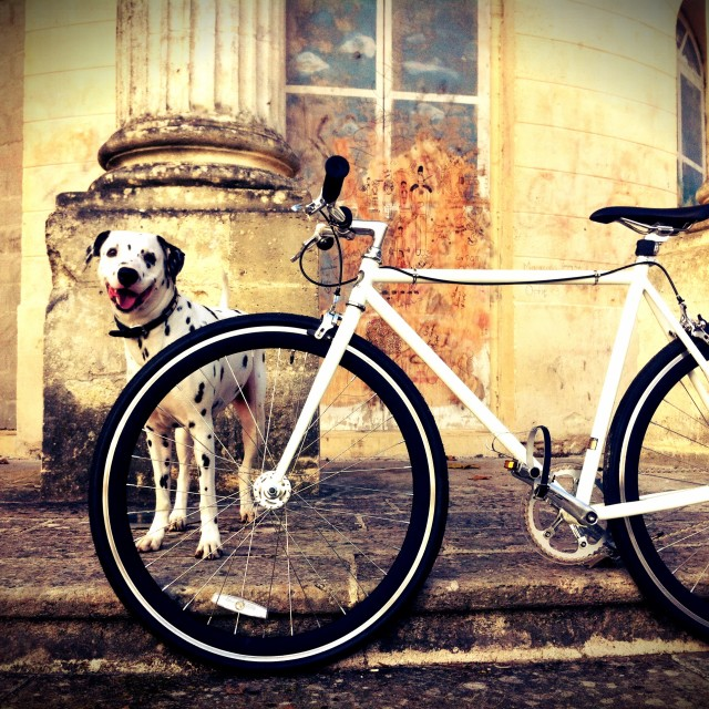 """Bike with the Dog"" stock image"