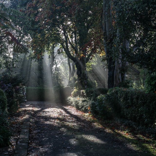 """Shafts of Light Through Trees"" stock image"