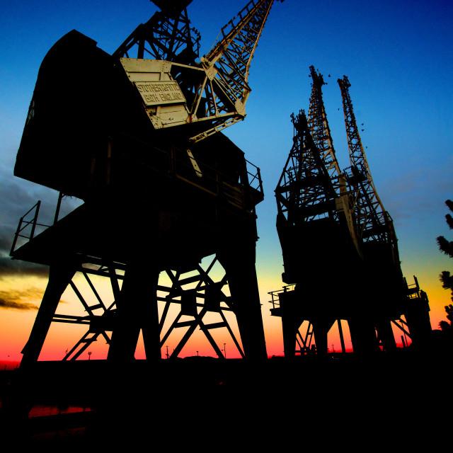 """Cranes at Sunset"" stock image"