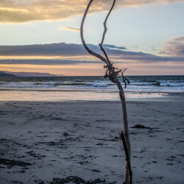 """Sunset Beach Tree"" stock image"
